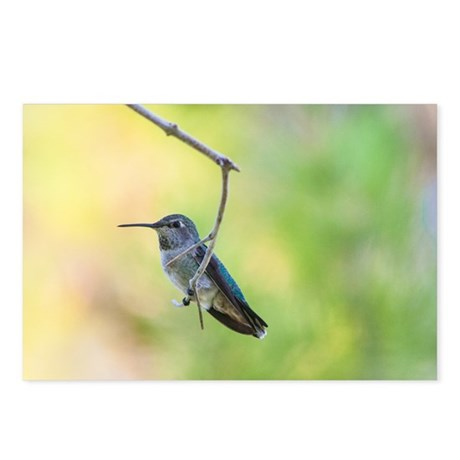 Hummingbird on green Postcards (Package of 8)