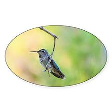 Hummingbird on green Decal