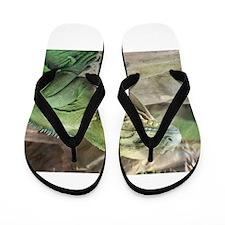 Iguana Flip Flops