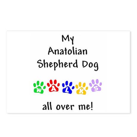 Anatolian Shepherd Walks Postcards (Package of 8)