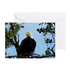 Bald Eagle in Tree with Sky Greeting Card