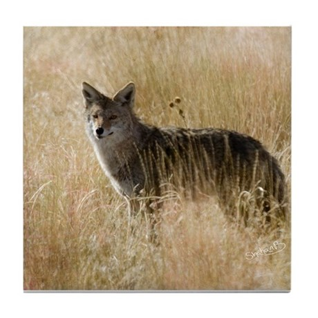 Coyote Tile Coaster