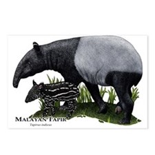 Malayan Tapir and Young Postcards (Package of 8)