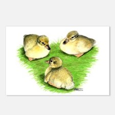 Snowy Mallard Ducklings Postcards (Package of 8)