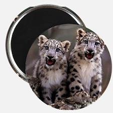 """Unique Leopard cubs 2.25"""" Magnet (10 pack)"""