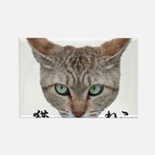 A Face01 Cat with words in japanese, so cool! Rect
