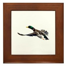 duck in flight Framed Tile