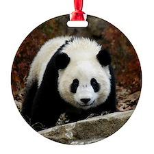 tai shan head on - square.jpg Ornament