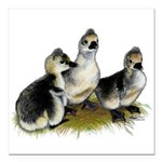 "Goslings on Grass Square Car Magnet 3"" x 3&qu"