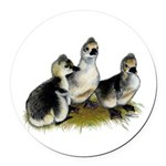 Goslings on Grass Round Car Magnet