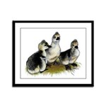 Goslings on Grass Framed Panel Print