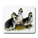 Goslings on Grass Mousepad