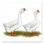 White African Geese Square Car Magnet 3