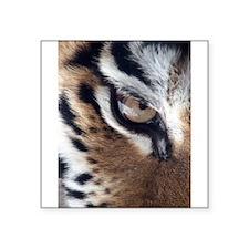 "tigereye.jpg Square Sticker 3"" x 3"""