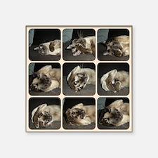 "Tonkinese Self Petting Square Sticker 3"" x 3"""
