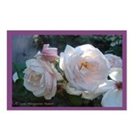 Perfect Roses Postcards (Package of 8)
