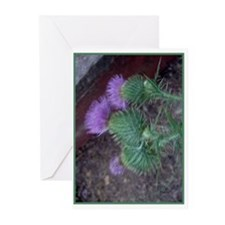 Thistle Trio Greeting Cards (Pk of 10)
