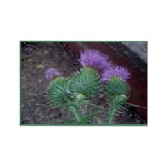 Thistle Trio Rectangle Magnet (100 pack)