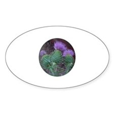 Thistle Trio Oval Decal