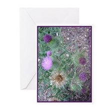 Thistles in various stages Greeting Cards (Package
