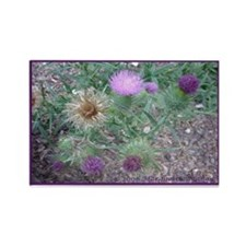 Thistles in various stages Rectangle Magnet