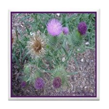 Thistles in various stages Tile Coaster