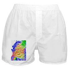 singapore P6290073 B.jpg Boxer Shorts