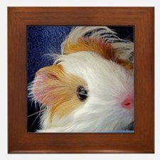 Baby Guinea Pig Face Framed Tile