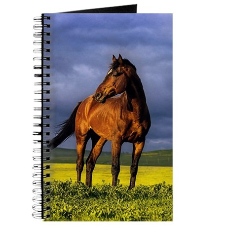 Brown horse on sunset Journal