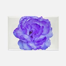 Wendy Purple Rose Rectangle Magnet