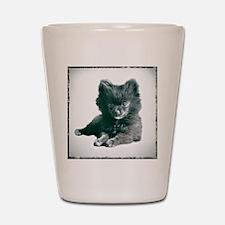 Adorable Black Pomeranian Puppy Shot Glass