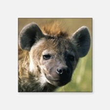 "Hyena Square Sticker 3"" x 3"""