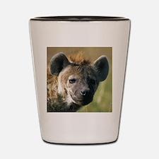 Hyena Shot Glass