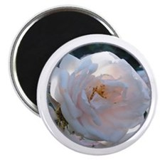 Perfect Roses Magnet