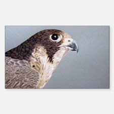 Peregrine Falcon Rectangle Decal