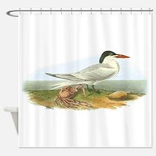 Royal Tern bird Shower Curtain