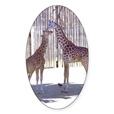 2 Young Giraffes Oval Decal