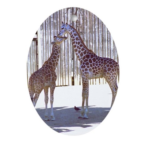 2 Young Giraffes Oval Ornament