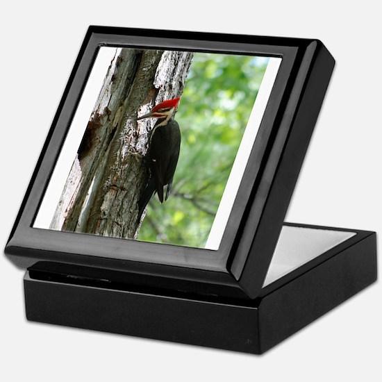 Pileated Woodpecker Keepsake Box