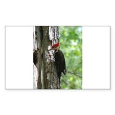Pileated Woodpecker Decal