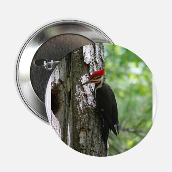 """Pileated Woodpecker 2.25"""" Button"""