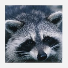 Cute Raccoon Tile Coaster