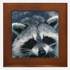 Cute Raccoon Framed Tile