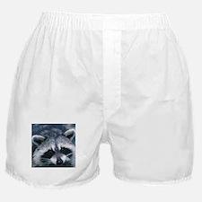 Cute Raccoon Boxer Shorts