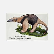 Northern Tamandua Anteater Rectangle Magnet