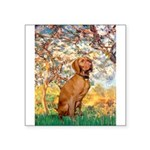 Spring / Vizsla Square Sticker 3