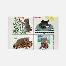 Four Seasons of The Kitten Cam Scientist Kittens R
