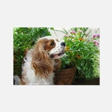 Dexter Flowers Rectangle Magnet (100 pack)