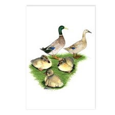 Welsh Harlequin Duck Family Postcards (Package of