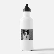 Border Collie Puppy Water Bottle